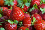 Eversweet Ever Bearing Strawberry Plants - Large, Sweet, And Juicy Berries