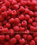 Saanich Raspberry Rootstock - Nearly Thornless - Highest Yields - Sweet