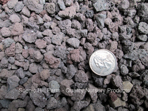 "1/4"" - 1/2"" Lava Rock for Bonsai Soil, Succulents, Cactus & Soil Mixes"