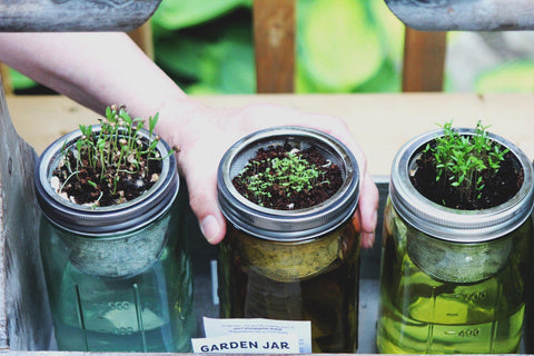 Reuse Glass Jar Seed Sprout Garden