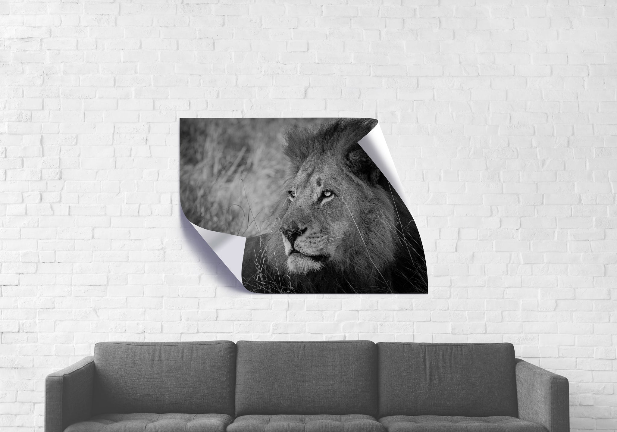 Male Lion - Wall Cling