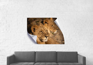 Lion Brothers - Wall Cling