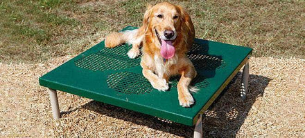 Paws Table for Dog Park