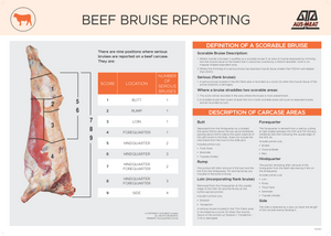 Beef Bruise Reporting Poster