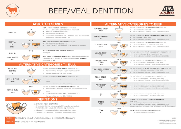 Beef/Veal Dentition Poster