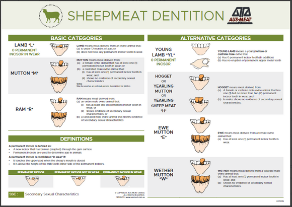 Sheep Dentition Poster