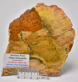 Stromatolite STRELLEY POOL SLICE, 3.4byo, SM136