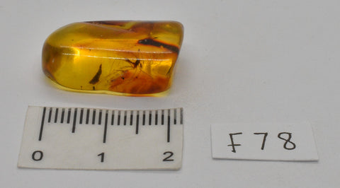 Amber with fossil insects in natural form  F78