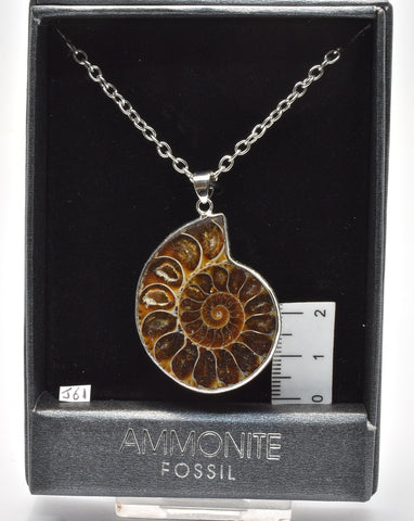 AMMONITE FOSSIL PENDANT ON A 60 cm CHAIN J61
