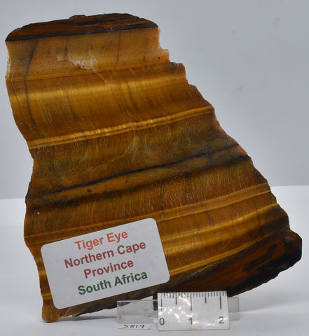 TIGER EYE Polished Slab, 95g, Northern Cape Province South Africa S819