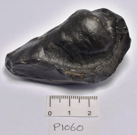 WHALE EAR BONE FOSSIL, Miocene, North Port Carolina, USA (P1060)