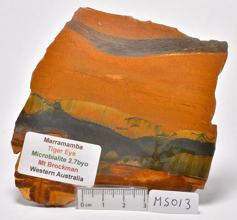 MARRAMAMBA TIGER EYE Polished Slice, Microbialite, Australia MS013