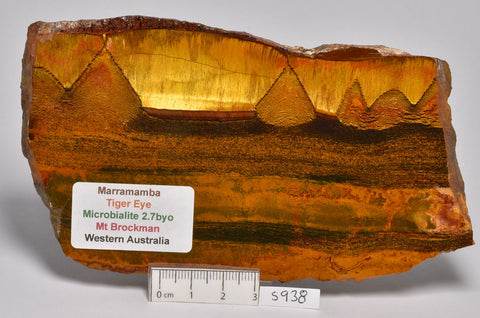 MARRAMAMBA TIGER EYE Polished Slice, Microbialite, Australia S938