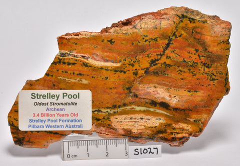 Stromatolite STRELLEY POOL SLICE, 3.4byo, S1027