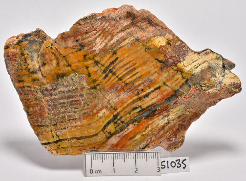 Stromatolite STRELLEY POOL SLICE, 3.4byo, S1035