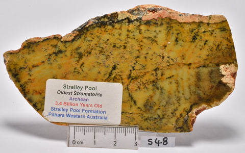 Stromatolite STRELLEY POOL SLICE, 3.4byo, S48
