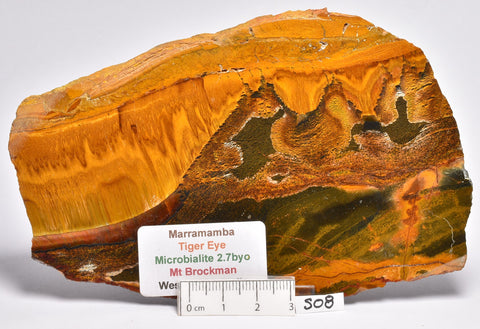 MARRAMAMBA TIGER EYE Polished Slice, Microbialite, Australia S08