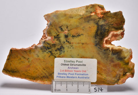 Stromatolite STRELLEY POOL SLICE, 3.4byo,  S14