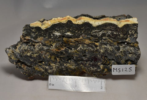 STROMATOLITE Microbial Fossil Mat Dresser Formation, Australia SLICE MS125