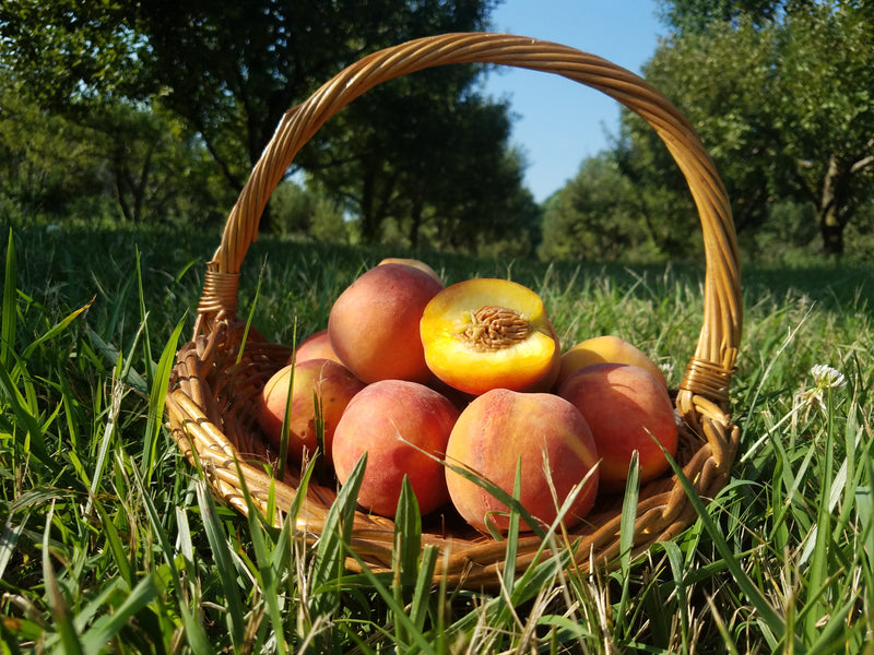 Farm Fresh Tomatoes and Missouri Peaches are Here!