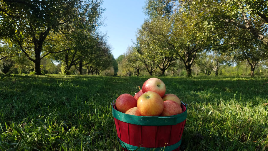 You-Pick Gala Apples and Vegetable Garden Starts NOW!