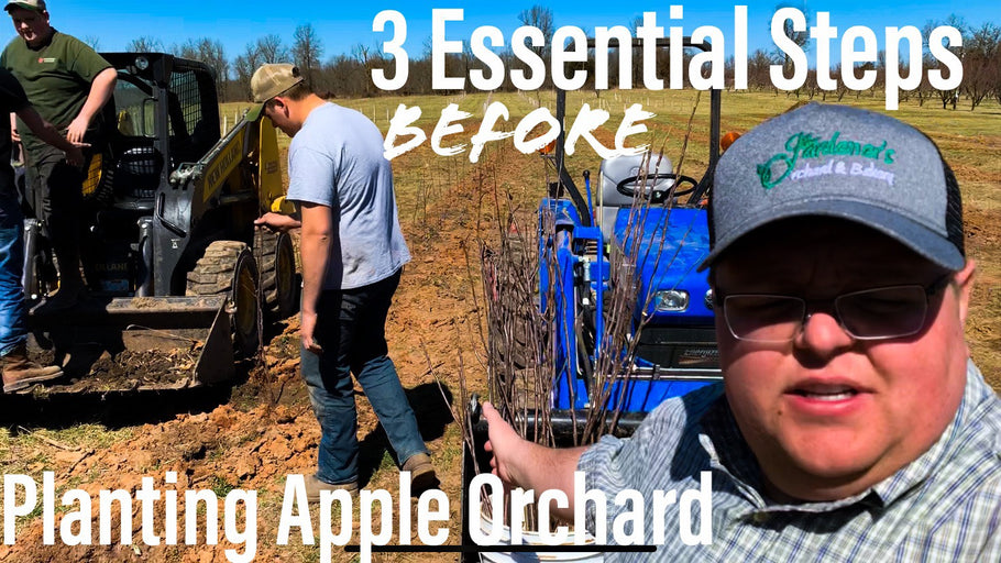 3 Steps we take before Planting new orchard!