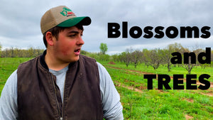 Farm Update with Blossoms, and Trees