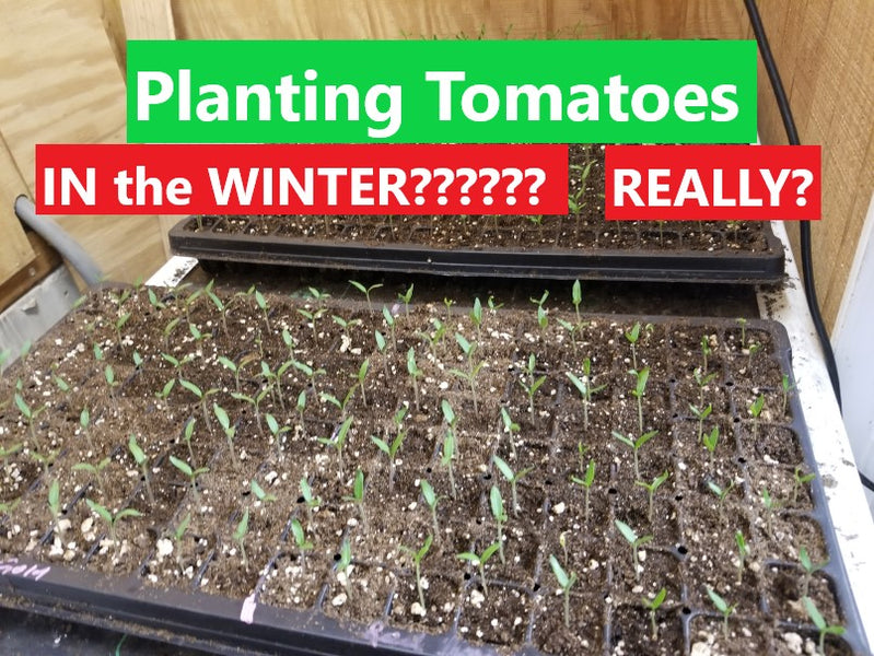 Farmer Dre is Already Planting TOMATOES!