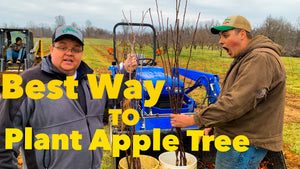 The Best way to Plant Apple Trees!