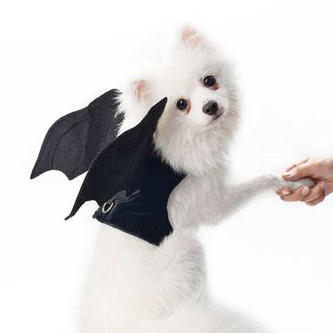 Black Wing Pet Costume