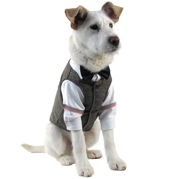 Gentleman Suit and Vest for pet