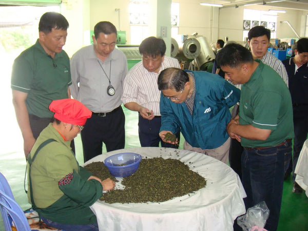 How oolong tea is made