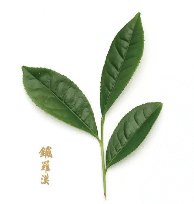 Tie Luo Han Oolong Tea Wuyi Rock Tea