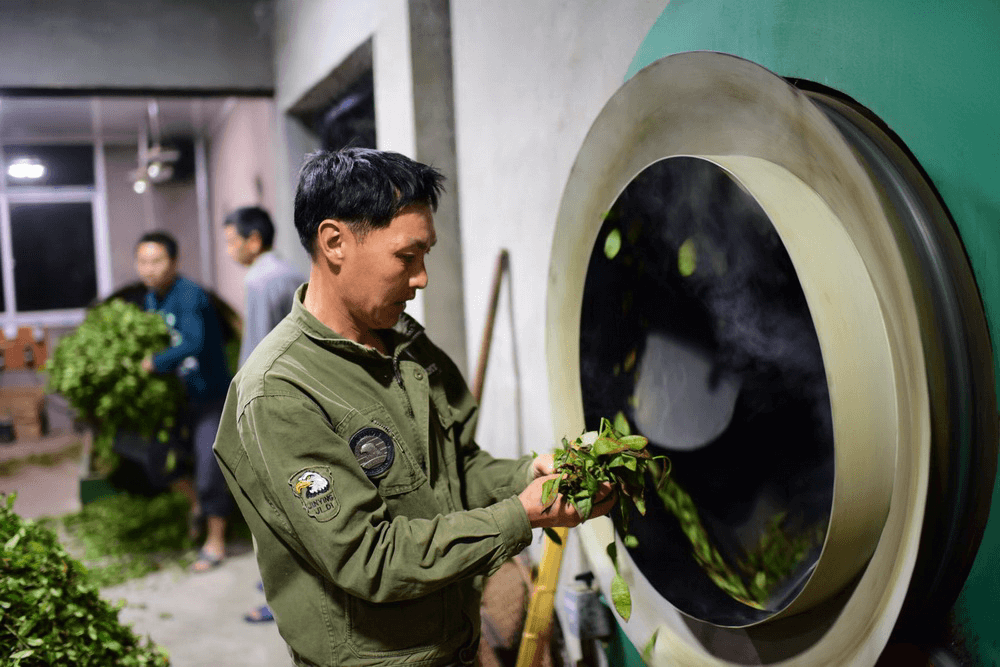 Wuyi Oolong Tea production Record