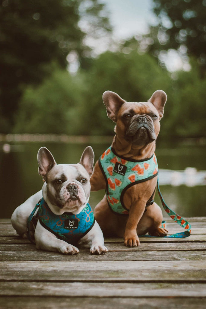 2-in-1 Hundegeschirr Exotic Melons - Fibi & Karl