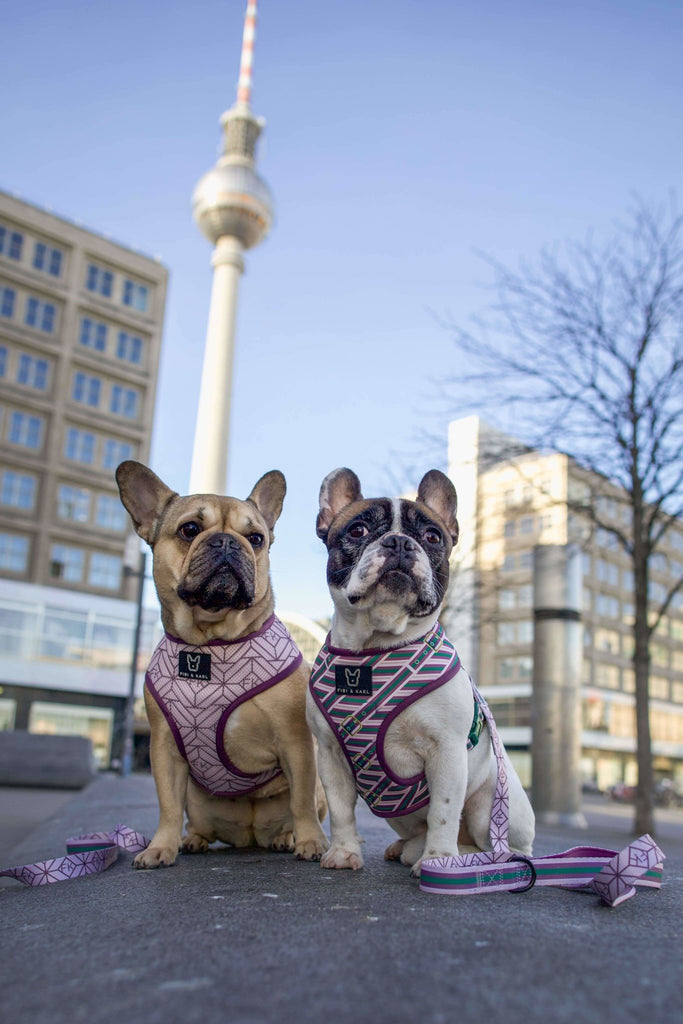2-in-1 Hundegeschirr FK Beltington - Fibi & Karl