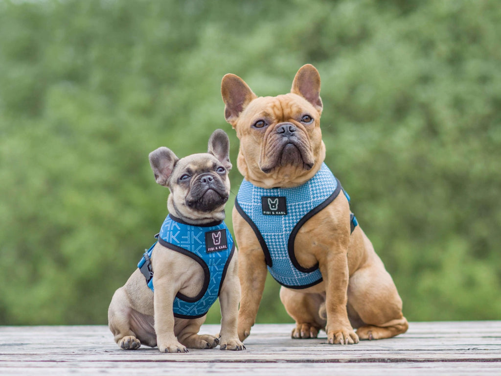 2-in-1 Hundegeschirr FK Summer Edition - Fibi & Karl
