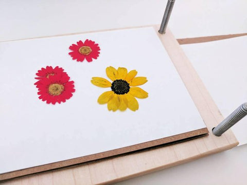wooden flower press - SALE - available