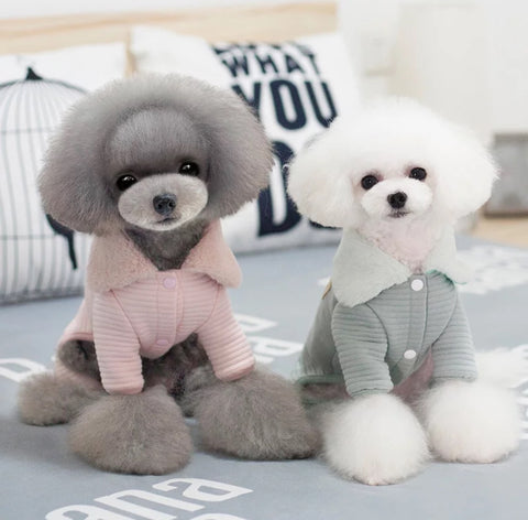 Cute Outfits-Small Breed