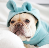 Bulldog Size Bunny Outfit