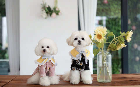 Sunflower Dog Outfit - Small Breed