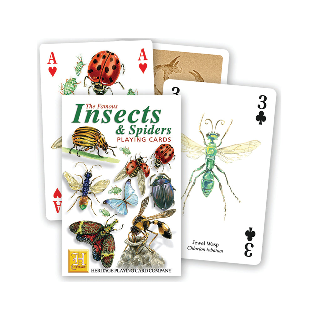 Insects and spiders playing cards