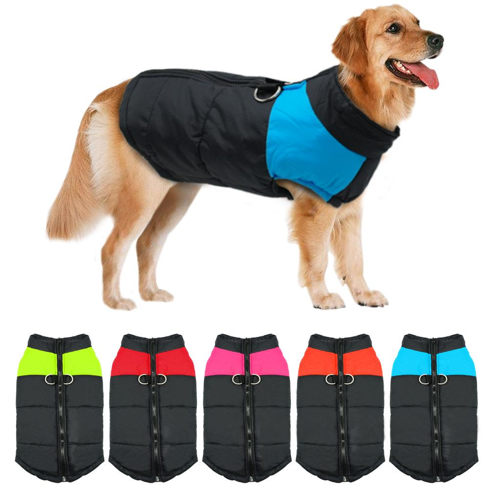 Golden Retriever Dog smilling wearing a waterproof winter jacket clothe
