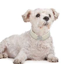 Load image into Gallery viewer, Rows Pearl Dog Necklace Choker Style - FunnyPaws