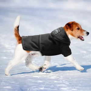 Medium puppy wearing black dog clothing waterproof jacket