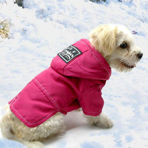Small dog wearing rose dog clothing waterproof jacket