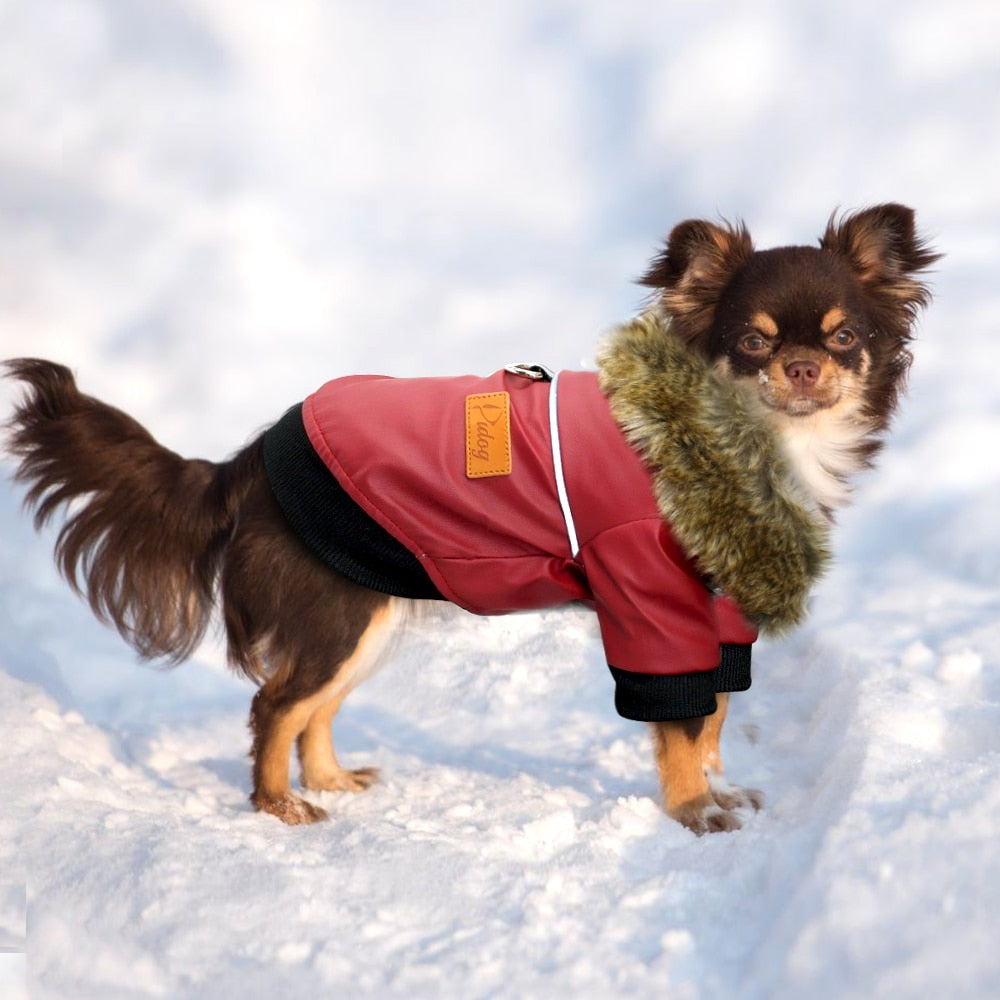 Small dog wearing a warm windproof jacket clothing