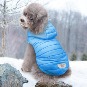 Cute dog wearing US warm cool jacket