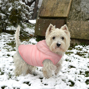 Little puppy wearing rose wateproof snow Jacket US
