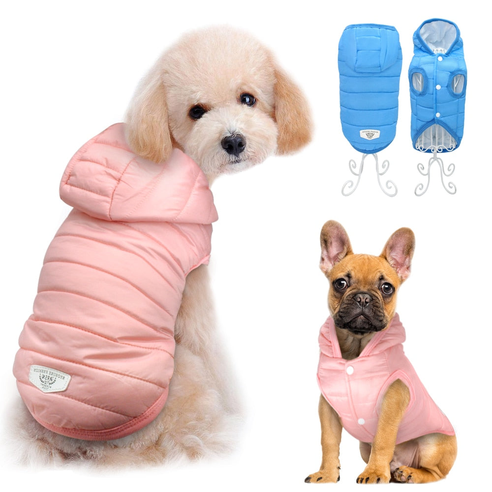 smalls dogs standing wearing waterproof jacket US
